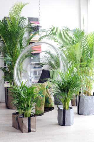 Plantes vertes_03