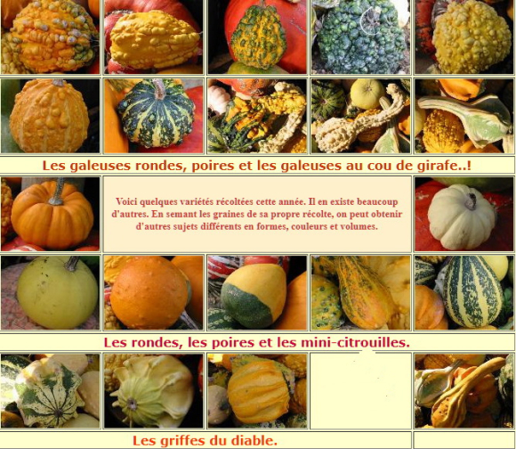Coloquintes variétés