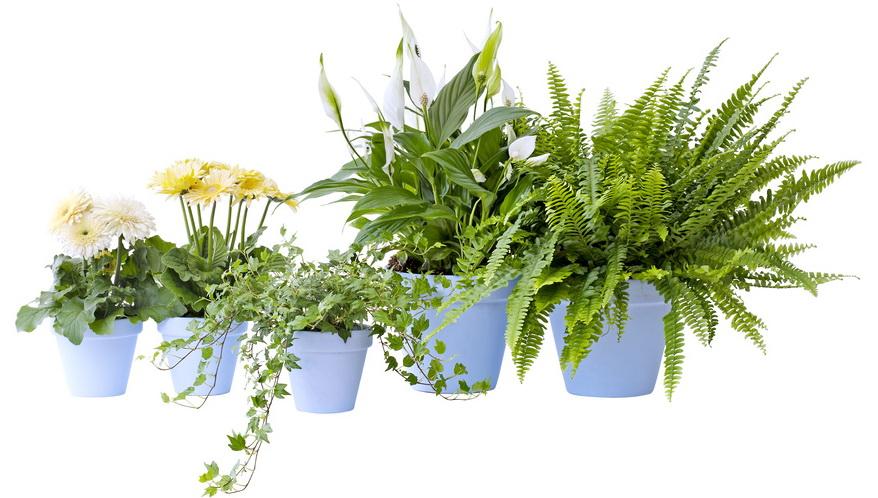 Le Pouvoir Des Fleurs Plantes Dépolluantes