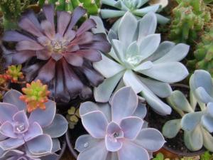 Succulentes_03
