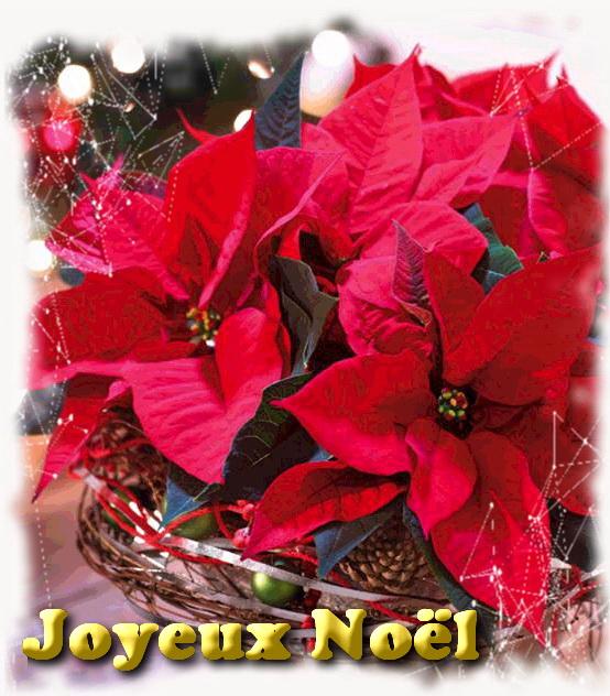 Poinsettia noel 3B
