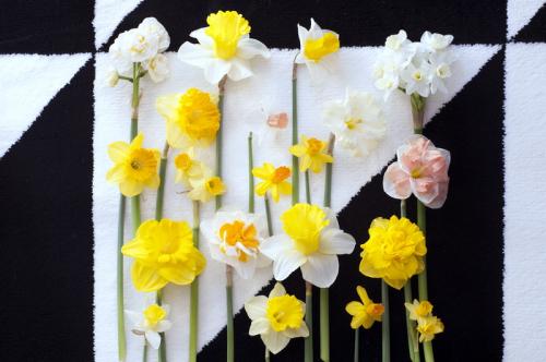 Narcisse_02
