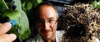Intelligenge des plantes Stefano Mancuso
