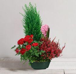 Tousaint-coupe plantes