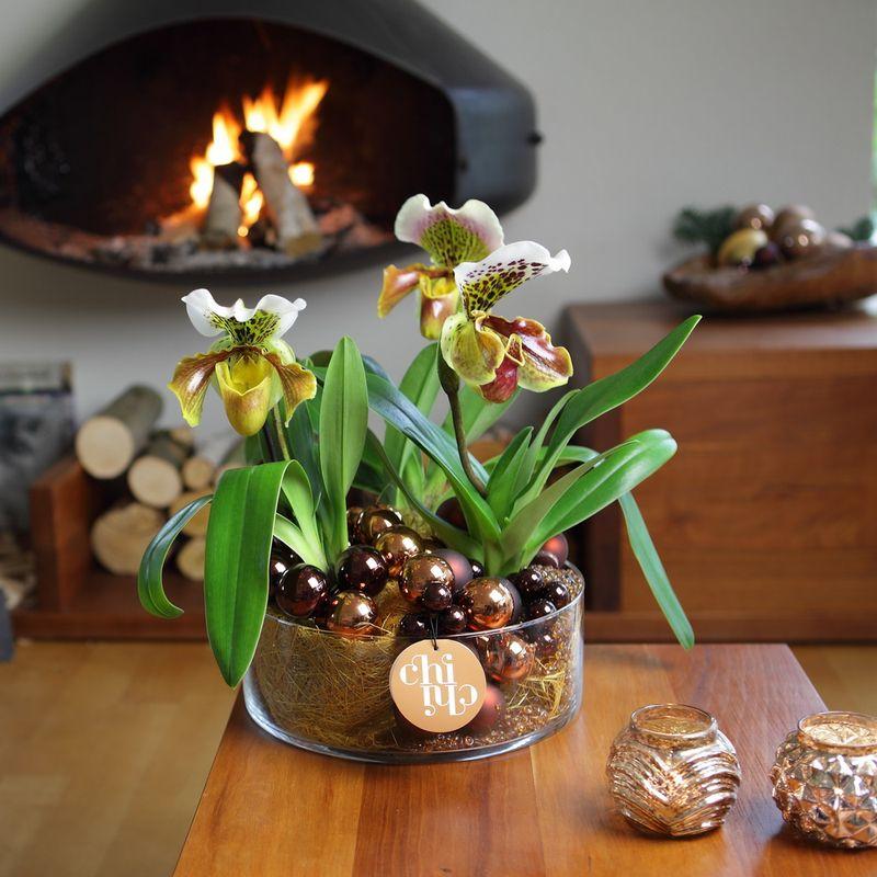 Orchidée Paphiopedilum_04