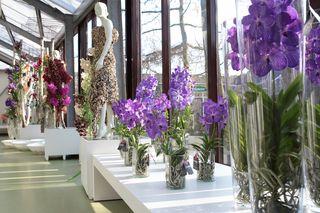 orchidee vanda botanic