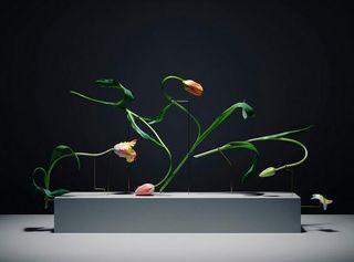 Tulipes yoga