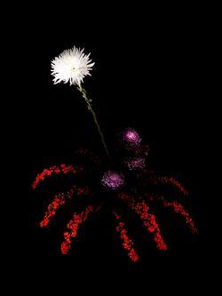 Flowerwork_02