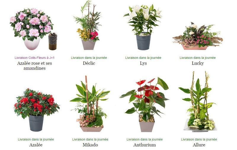 Interflora Grand-mère_plantes