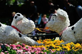 Disneyland printemps_05