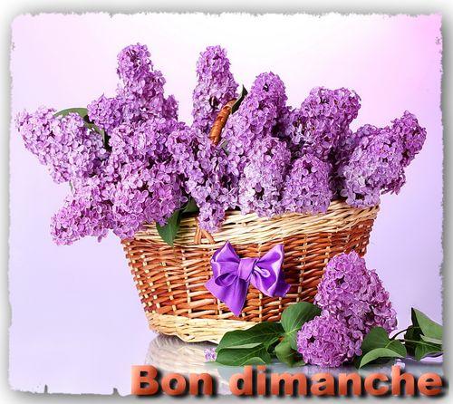 Dimanche lilas Brindas