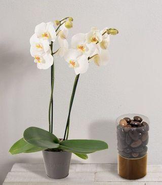 Interflora fête des Mères orchidée et amandines