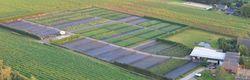 Delphinum André Westendorp site horticole