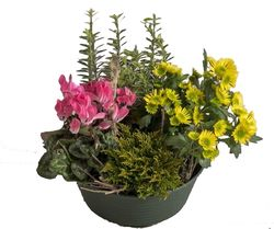 Coupe de plantes Interflora