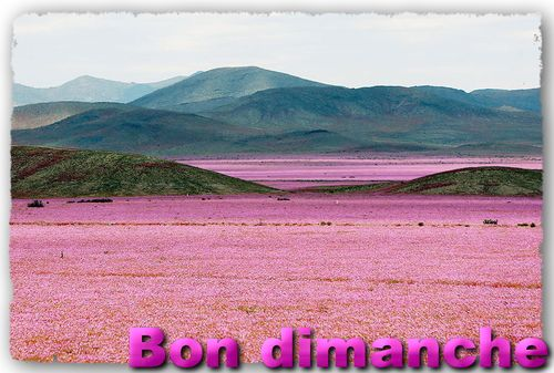 Atacama-fleurs-chili-1