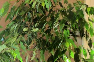 Plantes automne  détail