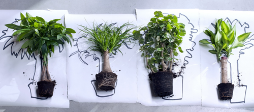 Plantes totem_1
