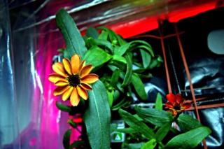 Scott Kelly fleur espace 1