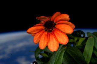 Scott Kelly fleur espace 4
