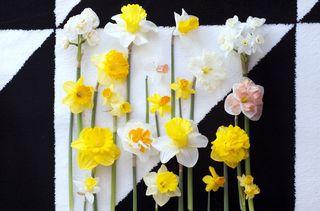 Narcisse-00