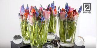 Video bloomtube fleurs printemps 1