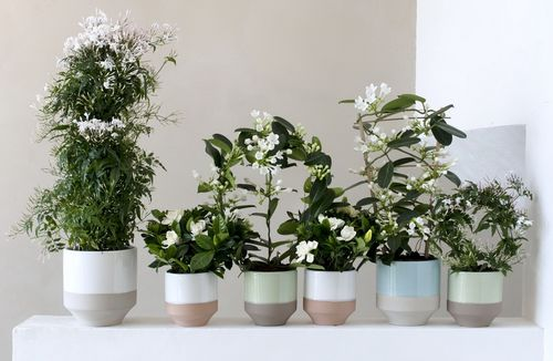 OHF plantes blanches 00