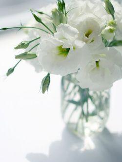 514f0a3d2ba0 Connaissez-vous les Lisianthus ou Eustomas   - Le pouvoir des fleurs