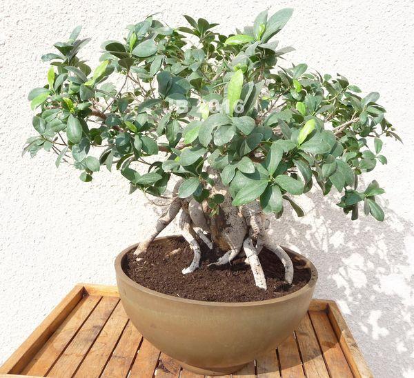 il est emps de rempoter vos plantes d 39 appartement le. Black Bedroom Furniture Sets. Home Design Ideas