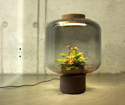 Lampe plantes 03