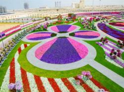 Jardin miracle Dubaï 01