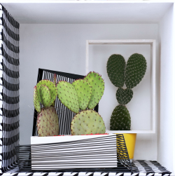 Cactus _01