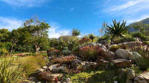 Kirstenbosch-04