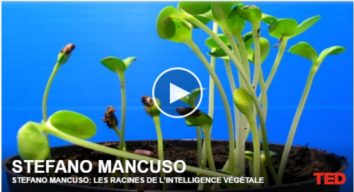 Stephano Mancuso conférence
