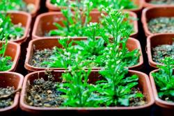 Stefano-mancuso-plantes intelligentes