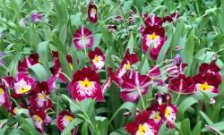 Orchidarium 7