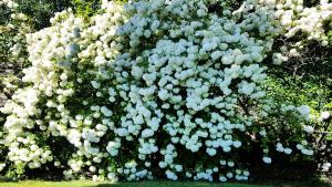 Fleurs des îles Borromées_06