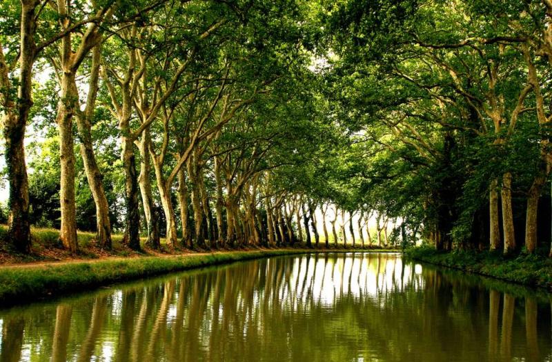 Platanes canal du midi