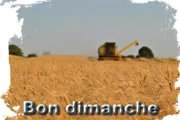 Chmp de blé