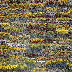 Azuma-makoto-flower-art-4