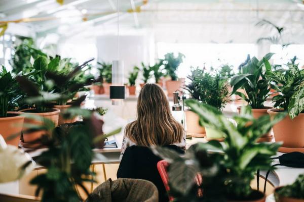 productivit et bien tre au travail gr ce aux plantes le pouvoir des fleurs. Black Bedroom Furniture Sets. Home Design Ideas