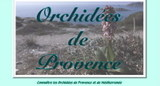 Orchidees_provence_01