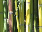 Bambouseraie3_2