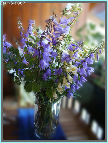 un bouquet de fleurs sauvages le pouvoir des fleurs. Black Bedroom Furniture Sets. Home Design Ideas