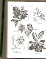 Bon_jardinier_dessins