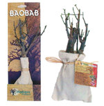 Baobab_vente