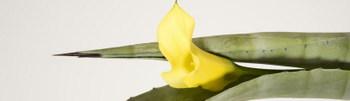 Harmonies_hybrides_interflora_jaune