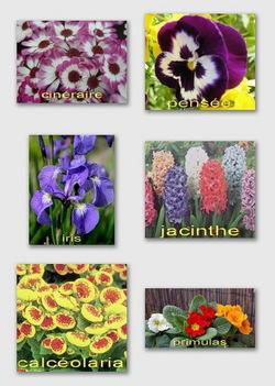 Plantes_printemps
