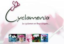 Cyclamenia_02