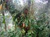 Epiphytes_06