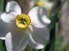 Narcisse_05